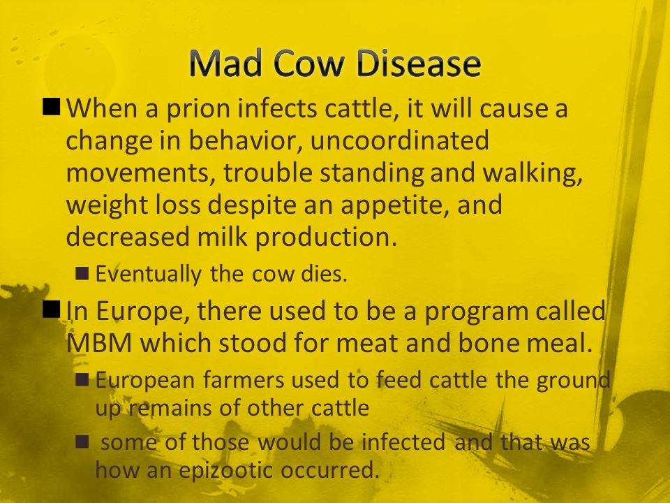 When a prion infects cattle, it will cause a change in behavior, uncoordinated movements, trouble standing and walking, weight loss despite an appetit