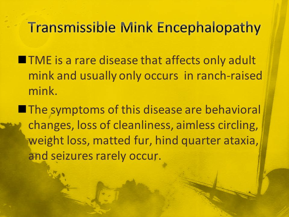 TME is a rare disease that affects only adult mink and usually only occurs in ranch-raised mink. The symptoms of this disease are behavioral changes,