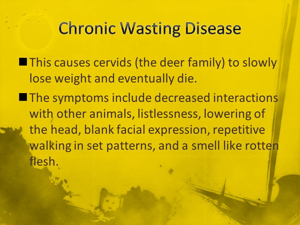This causes cervids (the deer family) to slowly lose weight and eventually die. The symptoms include decreased interactions with other animals, listle