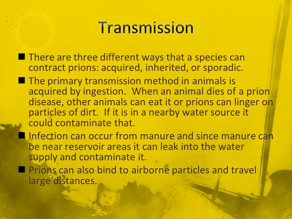 There are three different ways that a species can contract prions: acquired, inherited, or sporadic. The primary transmission method in animals is acq