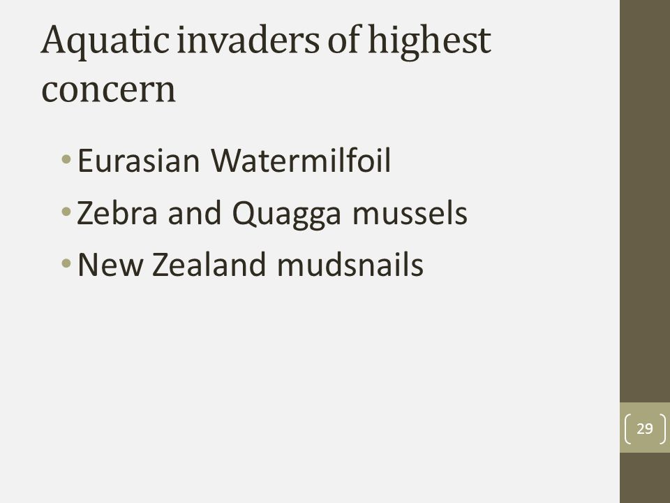 Aquatic invaders of highest concern Eurasian Watermilfoil Zebra and Quagga mussels New Zealand mudsnails 29