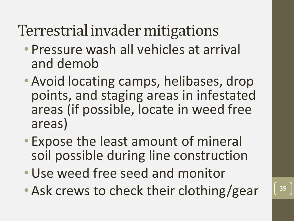 Terrestrial invader mitigations Pressure wash all vehicles at arrival and demob Avoid locating camps, helibases, drop points, and staging areas in infestated areas (if possible, locate in weed free areas) Expose the least amount of mineral soil possible during line construction Use weed free seed and monitor Ask crews to check their clothing/gear 39