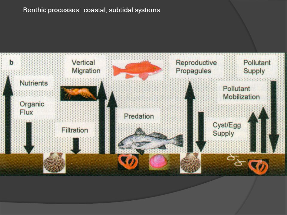 Benthic processes: coastal, subtidal systems