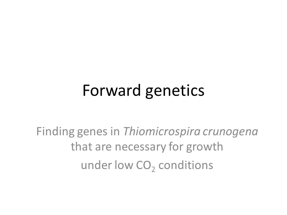 Forward genetics Finding genes in Thiomicrospira crunogena that are necessary for growth under low CO 2 conditions