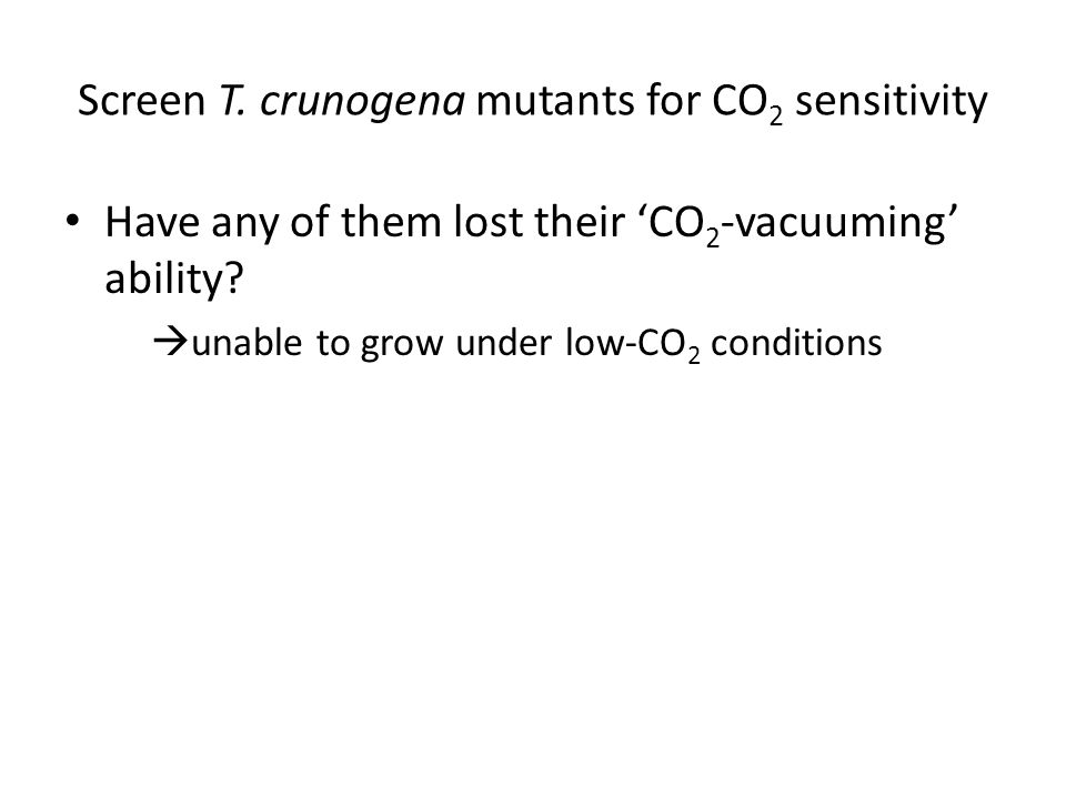 Screen T. crunogena mutants for CO 2 sensitivity Have any of them lost their 'CO 2 -vacuuming' ability?  unable to grow under low-CO 2 conditions