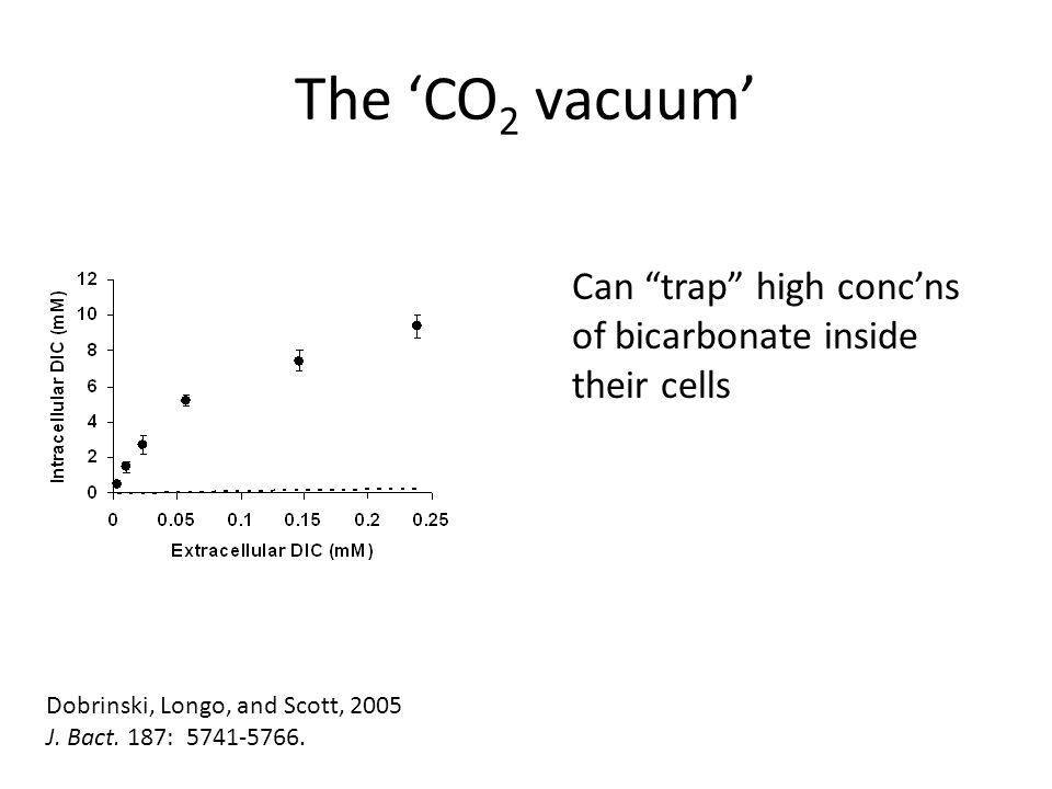 The 'CO 2 vacuum' Can trap high conc'ns of bicarbonate inside their cells Dobrinski, Longo, and Scott, 2005 J.