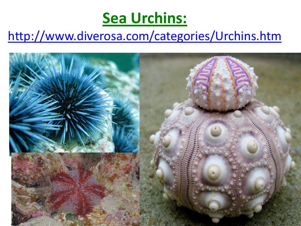 Sea Urchins: http://www.diverosa.com/categories/Urchins.htm http://www.diverosa.com/categories/Urchins.htm