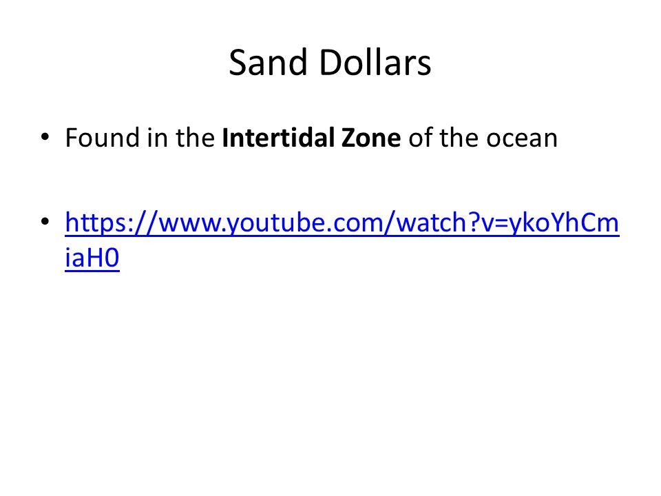 Sand Dollars Found in the Intertidal Zone of the ocean https://www.youtube.com/watch?v=ykoYhCm iaH0 https://www.youtube.com/watch?v=ykoYhCm iaH0