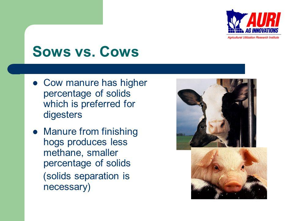 Sows vs.