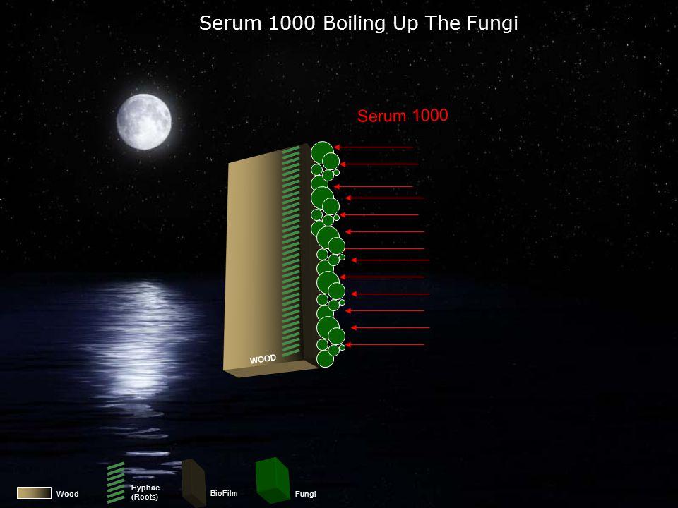 Wood BioFilm Fungi Applying Serum 1000 To Fungi Serum 1000 WOOD Hyphae (Roots)