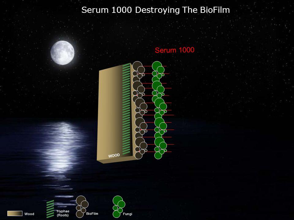 Wood Serum 1000 Attacking The BioFilm Serum 1000 WOOD BioFilm Fungi Hyphae (Roots)