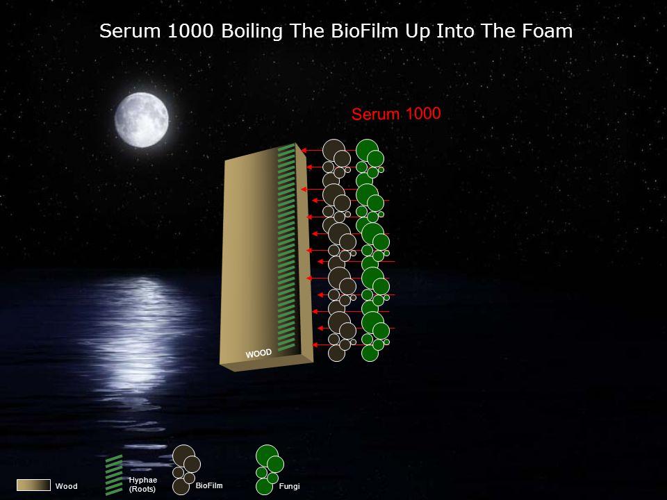 Wood BioFilm Fungi Serum 1000 Destroying The BioFilm Serum 1000 WOOD Hyphae (Roots)