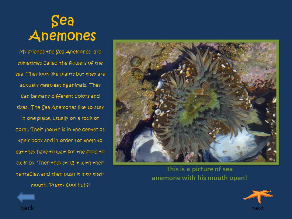 Sea Anemones My friends the Sea Anemones are sometimes called the flowers of the sea.