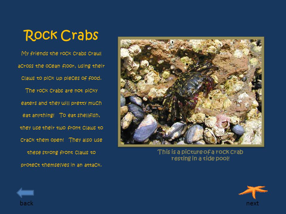 Rock Crabs My friends the rock crabs crawl across the ocean floor, using their claws to pick up pieces of food.