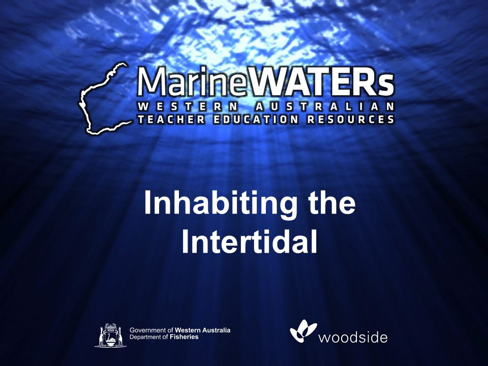 Inhabiting the Intertidal