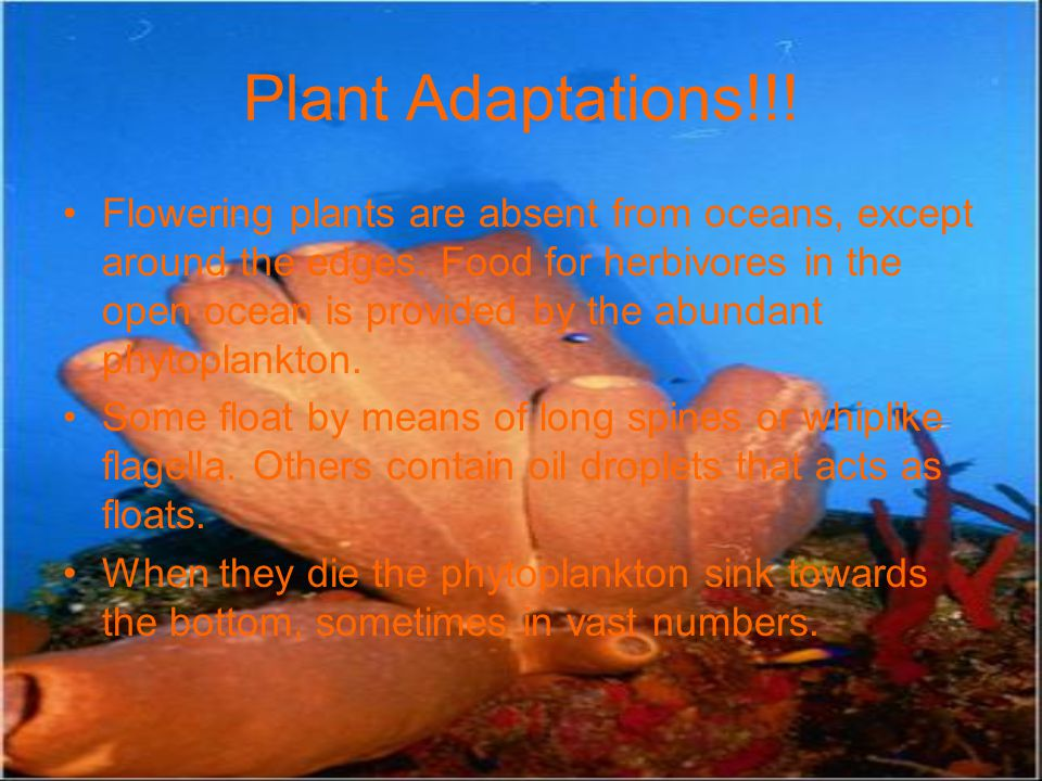 Plant Adaptations!!! Flowering plants are absent from oceans, except around the edges. Food for herbivores in the open ocean is provided by the abunda