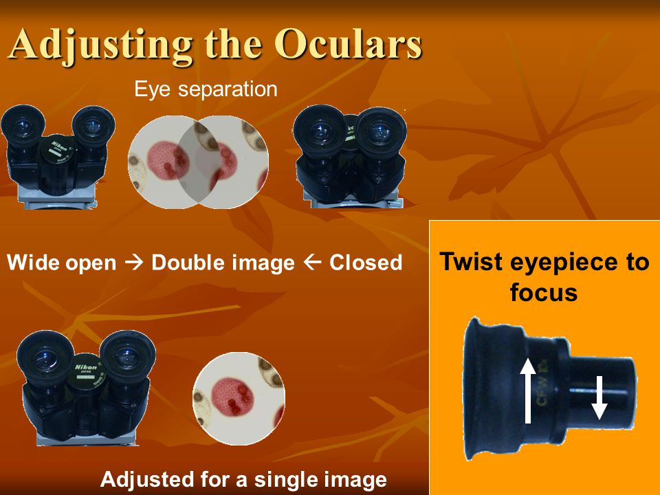 Adjusting the Oculars Twist eyepiece to focus Eye separation Adjusted for a single image Wide open  Double image  Closed