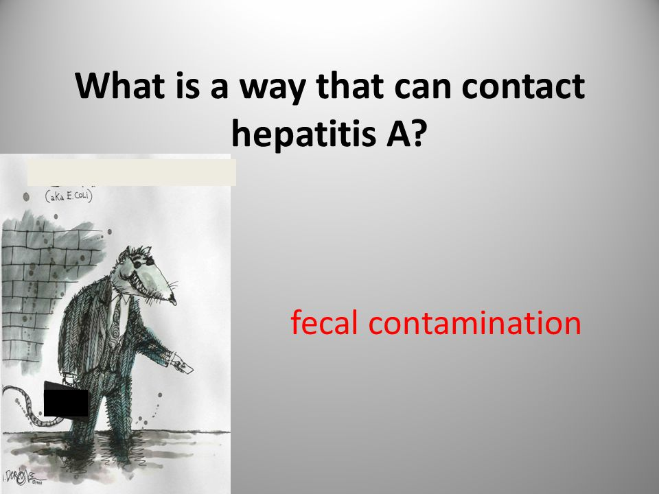 What is a way that can contact hepatitis A? fecal contamination