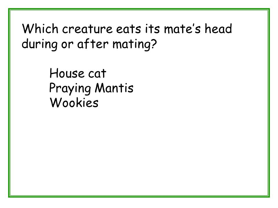 Which creature eats its mate's head during or after mating? House cat Praying Mantis Wookies