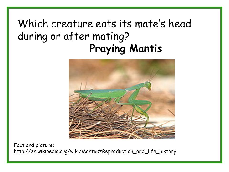 Which creature eats its mate's head during or after mating? Praying Mantis Fact and picture: http://en.wikipedia.org/wiki/Mantis#Reproduction_and_life