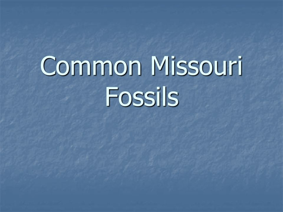 Common Missouri Fossils