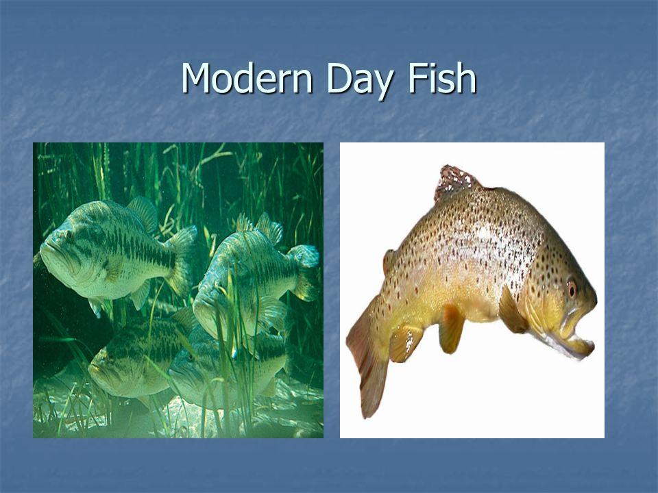 Modern Day Fish