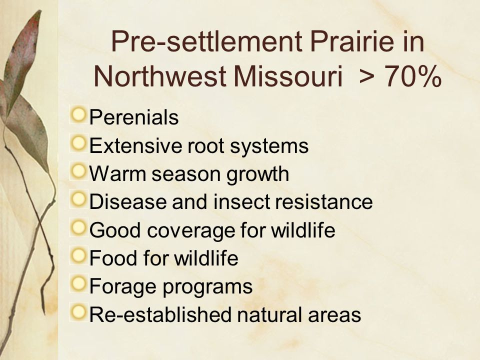 Perenials Extensive root systems Warm season growth Disease and insect resistance Good coverage for wildlife Food for wildlife Forage programs Re-established natural areas