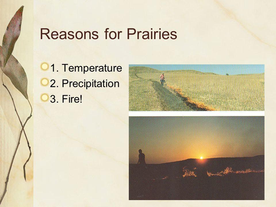 Reasons for Prairies 1. Temperature 2. Precipitation 3. Fire!