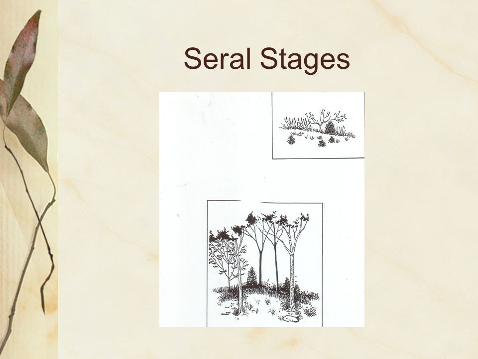 Seral Stages