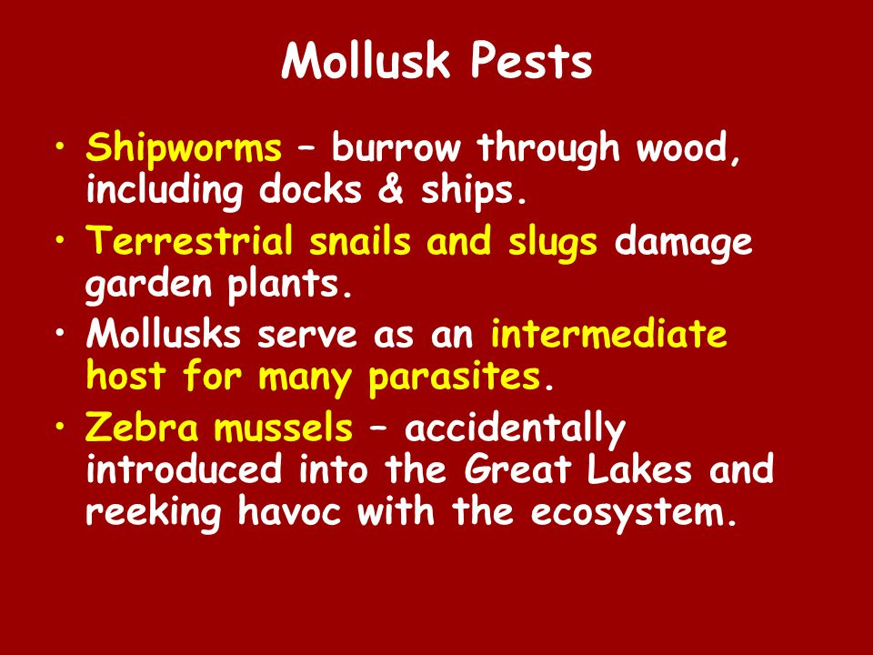 Mollusk Pests Shipworms – burrow through wood, including docks & ships.