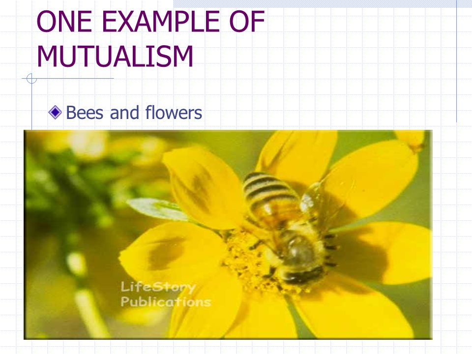 ONE EXAMPLE OF MUTUALISM Bees and flowers