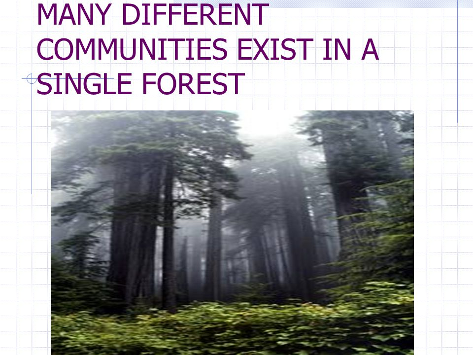 MANY DIFFERENT COMMUNITIES EXIST IN A SINGLE FOREST