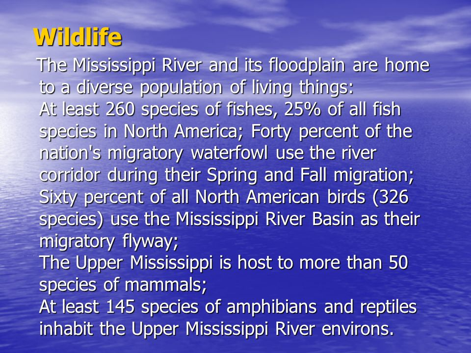 Wildlife The Mississippi River and its floodplain are home to a diverse population of living things: At least 260 species of fishes, 25% of all fish s
