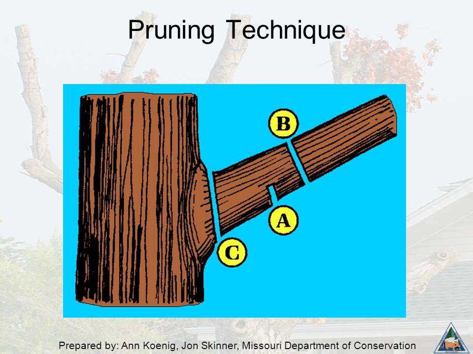 Prepared by: Ann Koenig, Jon Skinner, Missouri Department of Conservation Pruning Technique
