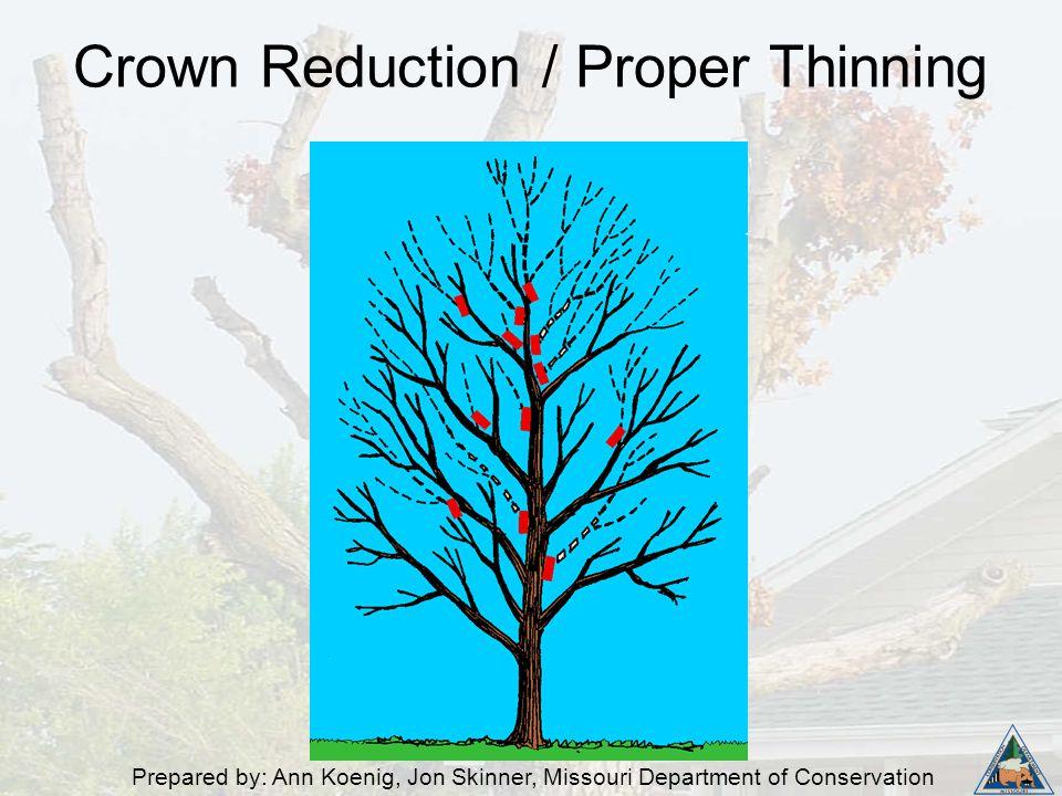 Prepared by: Ann Koenig, Jon Skinner, Missouri Department of Conservation Crown Reduction / Proper Thinning