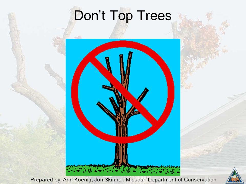 Prepared by: Ann Koenig, Jon Skinner, Missouri Department of Conservation Don't Top Trees
