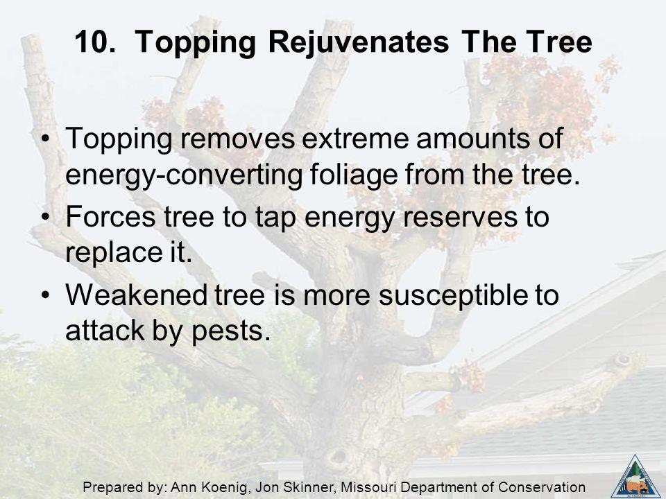 Prepared by: Ann Koenig, Jon Skinner, Missouri Department of Conservation 10. Topping Rejuvenates The Tree Topping removes extreme amounts of energy-c