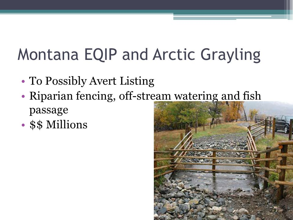 Montana EQIP and Arctic Grayling To Possibly Avert Listing Riparian fencing, off-stream watering and fish passage $$ Millions
