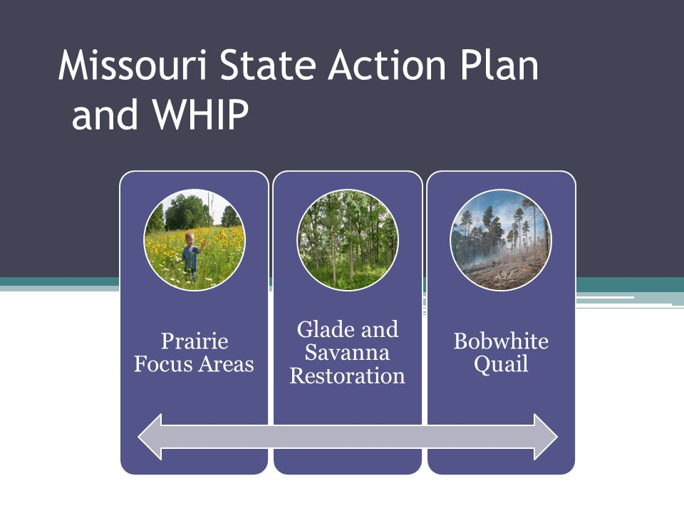 Missouri State Action Plan and WHIP Prairie Focus Areas Glade and Savanna Restoration Bobwhite Quail