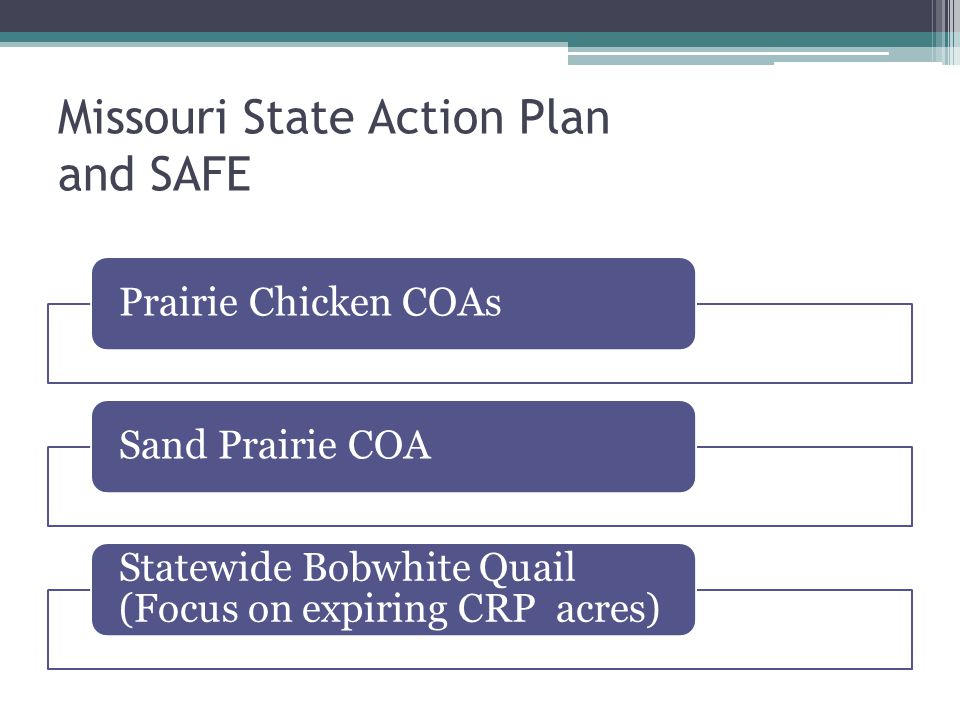 Other Conservation Reserve Program Forbs CP23 Wetland Restoration Mid-Contract Management ▫Dicksissel ▫Field Sparrow ▫Grasshopper Sparrow ▫Meadowlark ▫Prairie Chicken CP33 ▫Indigo bunting ▫Field Sparrow