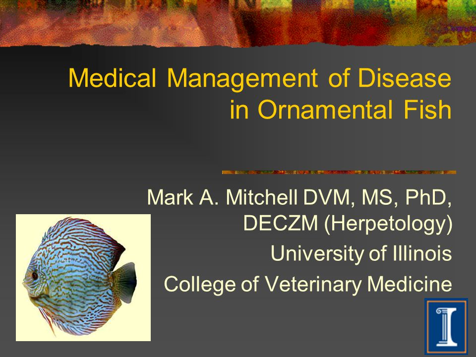 Medical Management of Disease in Ornamental Fish Mark A. Mitchell DVM, MS, PhD, DECZM (Herpetology) University of Illinois College of Veterinary Medic