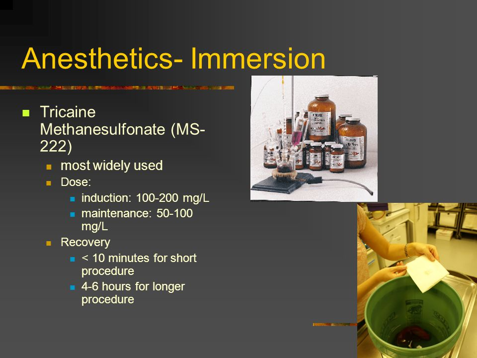 Anesthetics- Immersion Tricaine Methanesulfonate (MS- 222) most widely used Dose: induction: 100-200 mg/L maintenance: 50-100 mg/L Recovery < 10 minut