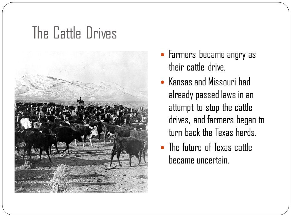 The Cattle Drives Farmers became angry as their cattle drive. Kansas and Missouri had already passed laws in an attempt to stop the cattle drives, and