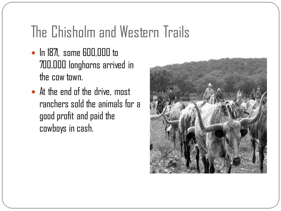The Chisholm and Western Trails In 1871, some 600,000 to 700,000 longhorns arrived in the cow town. At the end of the drive, most ranchers sold the an