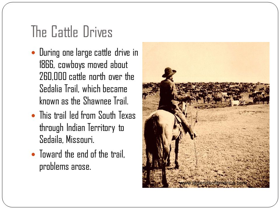 The Cattle Drives During one large cattle drive in 1866, cowboys moved about 260,000 cattle north over the Sedalia Trail, which became known as the Sh