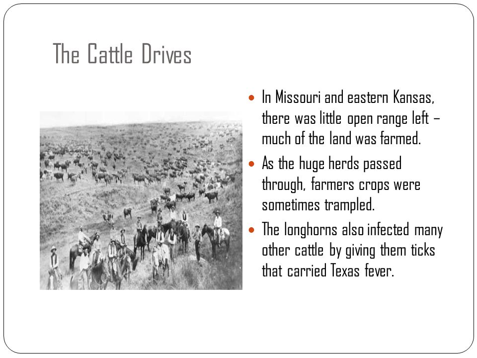 The Cattle Drives In Missouri and eastern Kansas, there was little open range left – much of the land was farmed. As the huge herds passed through, fa