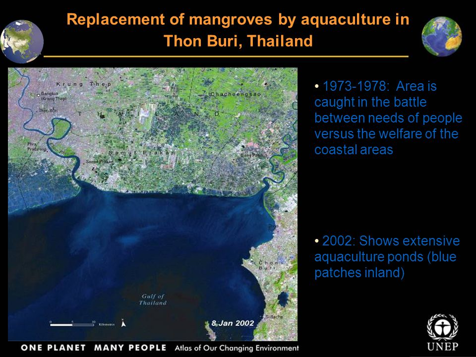 Replacement of mangroves by aquaculture in Thon Buri, Thailand 1973-1978: Area is caught in the battle between needs of people versus the welfare of the coastal areas 2002: Shows extensive aquaculture ponds (blue patches inland)