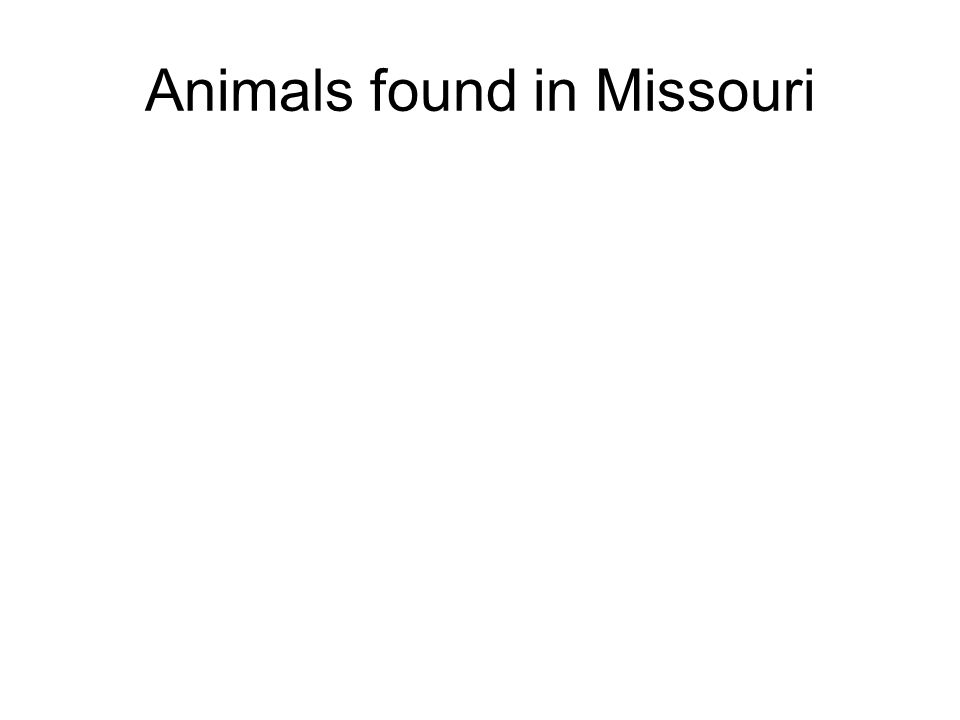 Animals found in Missouri