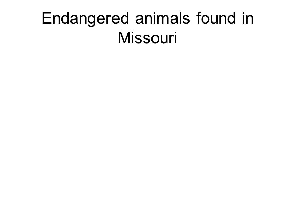 Endangered animals found in Missouri