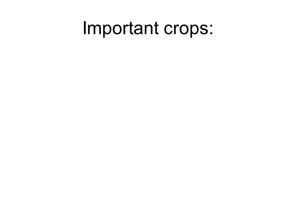 Important crops: